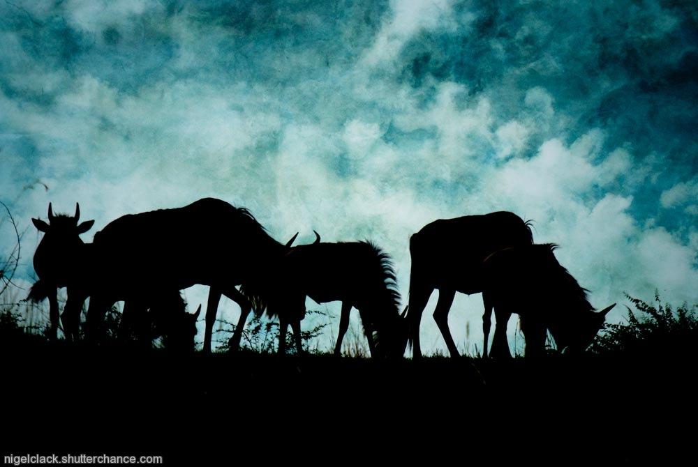 photoblog image Wilderbeest on the very near horizon