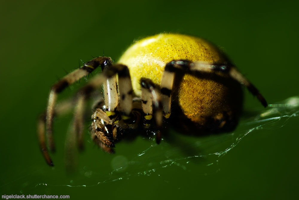 photoblog image Fat spider